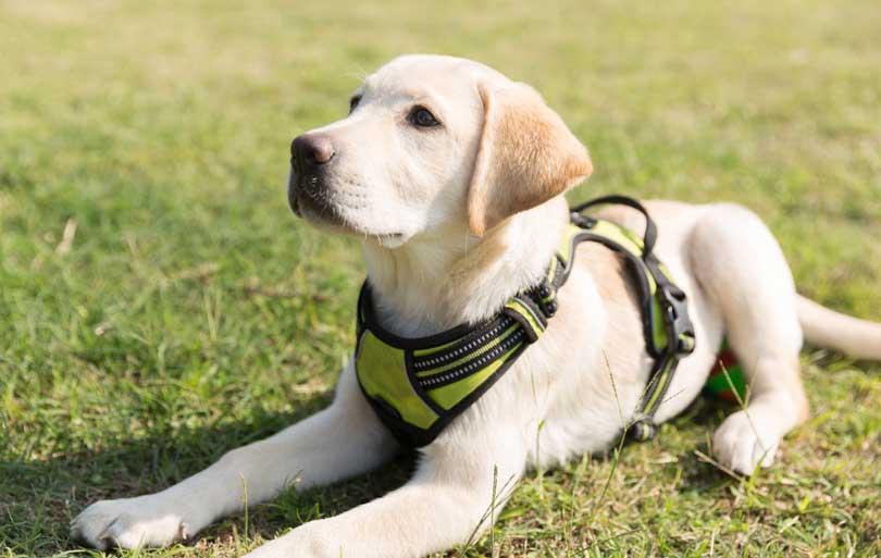 bases de la educación canina