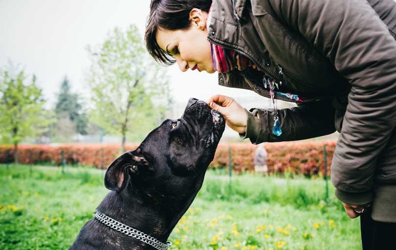 estudiar y trabajar con perros