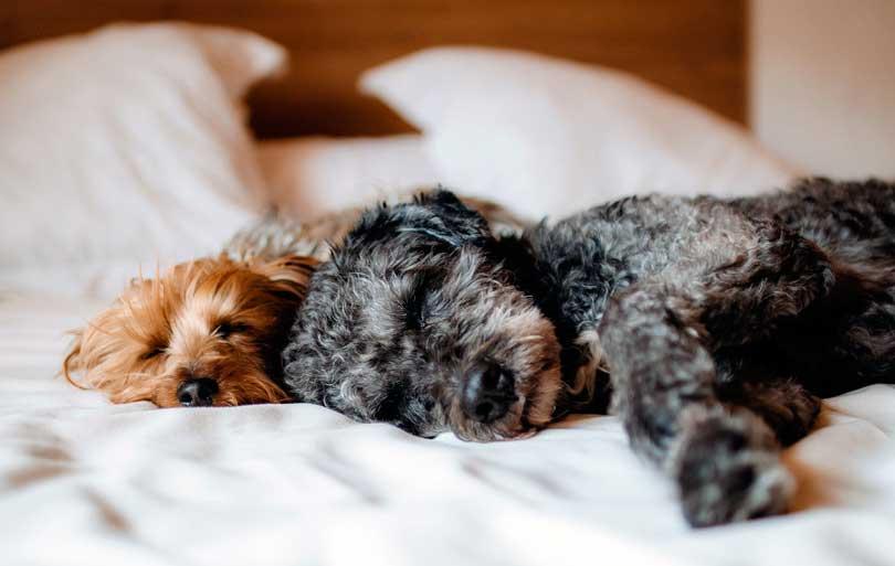 Métodos de esterilización para pequeños animales