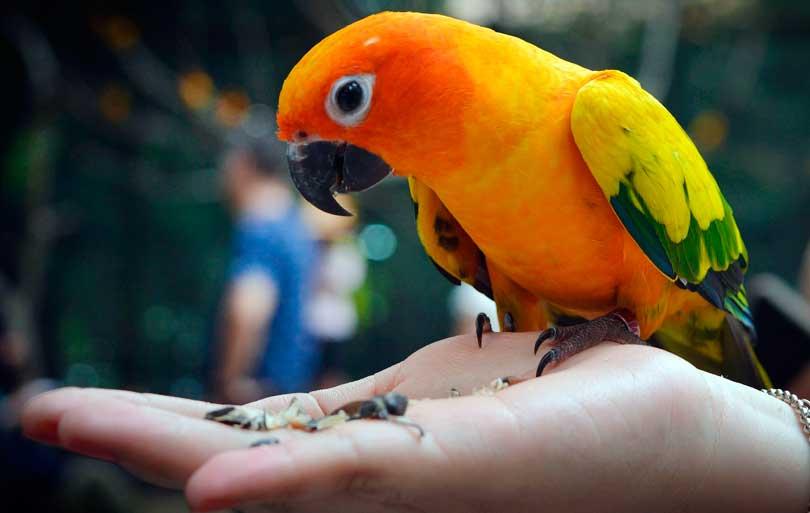 Manejo de aves en la consulta veterinaria
