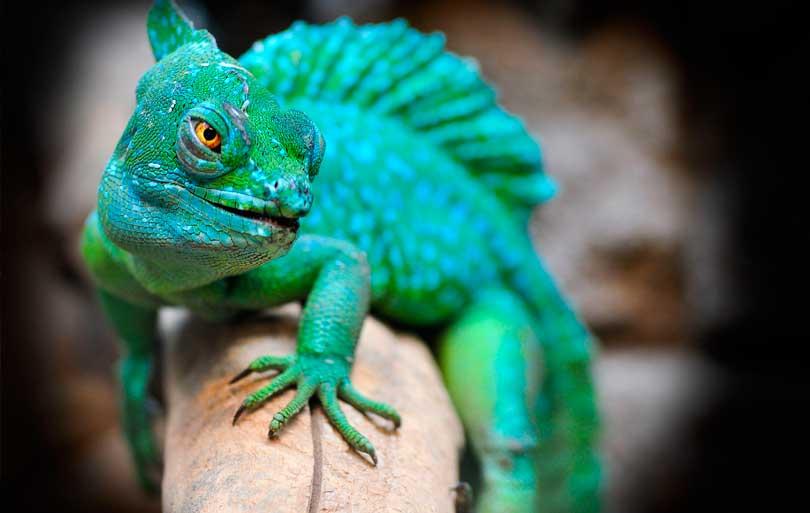 Principales patologías de los reptiles que acuden a la clínica