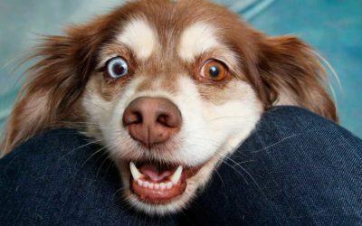 Morfología de perros y lobos. ¿Son tan parecidos?