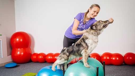 curso educador y adiestrador canino